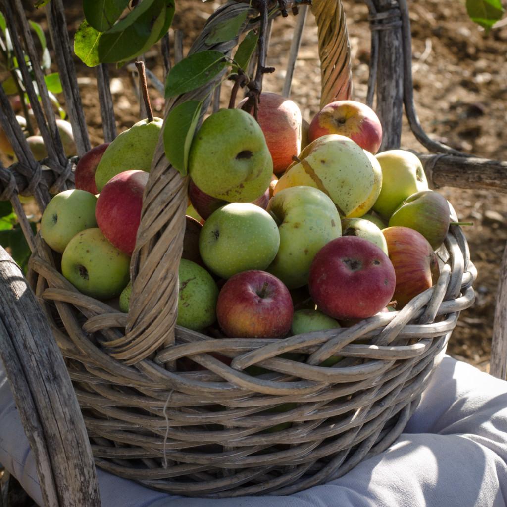 festa del pomodoro-8231