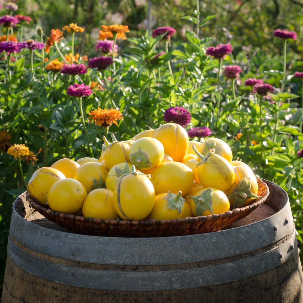 festa del pomodoro-8378